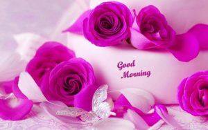 Good Morning Whatsapp DP Profile Images photo Pics With Flower