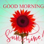 352+ Good Morning Profile Images Wallpaper for Whatsapp DP