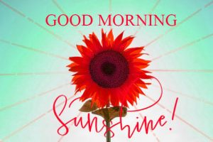 Good Morning Whatsapp DP Profile Images Pictures HD Download