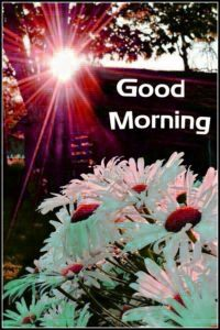 Good Morning Whatsapp DP Profile Images Pictures photo Download
