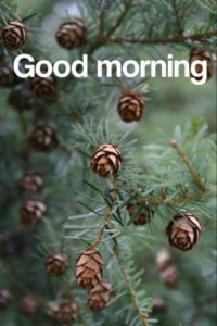 Good Morning Whatsapp DP Profile Images Wallpaper Photo Pics