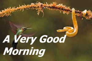 Good Morning Whatsapp DP Profile Images Pics HD Download