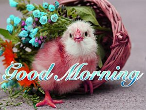 Good Morning Whatsapp DP Profile Images Wallpaper Pics