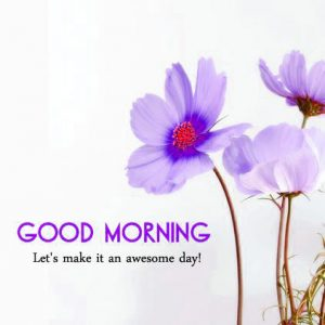 Good Morning Whatsapp DP Profile Images Wallpaper Pics Download