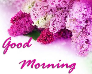 Good Morning Images Photo Pics Free Download