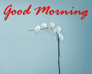 Good Morning Images Wallpaper Photo Pics