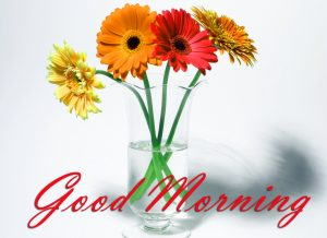 Good Morning Images Wallpaper Pictures