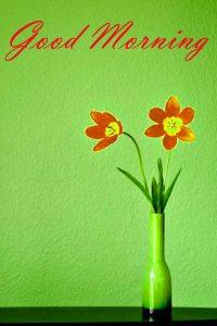 Good Morning Images Wallpaper pics Free Download