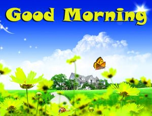 Good Morning Images Wallpaper Pics HD