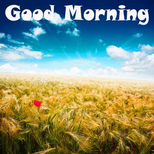 Good Morning Images Photo Picture Download