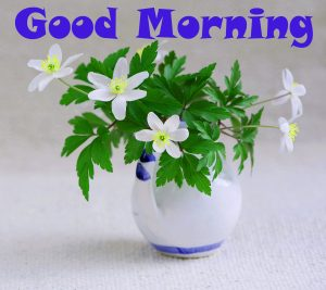 Good Morning Images Wallpaper Pics Photo