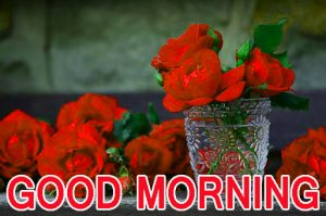 Romantic Lover Lover Couple Good Morning Images Wallpaper Pic With Red Rose