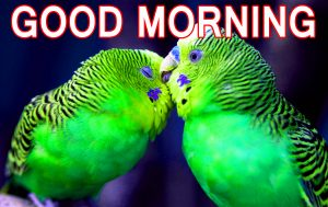 Romantic Lover Lover Couple Good Morning Images Wallpaper Pic Download