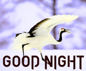 Beautiful Good Night Wishes Images pictures photo free hd