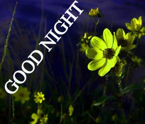 Beautiful Good Night Wishes Images Wallpaper Pics photo