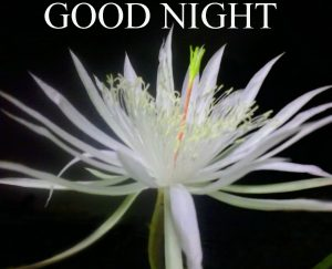 Beautiful Good Night Wishes Images Pic Pictures