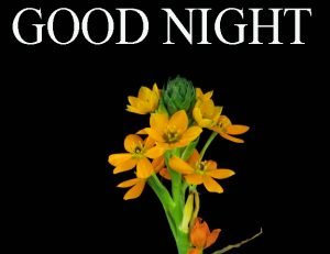 Beautiful Good Night Wishes Images Pictures free Download