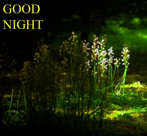 Beautiful Good Night Wishes Images Photo Download