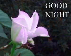 Beautiful Good Night Wishes Images Photo Pics Download