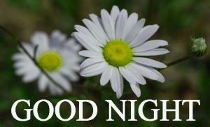 Beautiful Good Night Wishes Images Photo for Facebook
