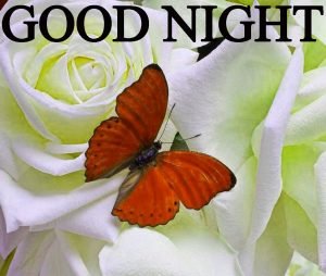Beautiful Good Night Wishes Images Wallpaper Pics for Facebook