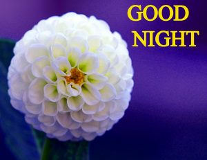 Beautiful Good Night Wishes Images Pics Wallpaper Download