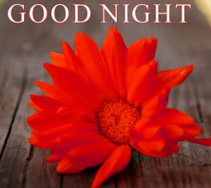 Beautiful Good Night Wishes Images Pics Pictures Download