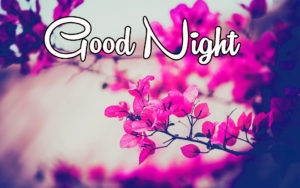 Lovely Good Night Images pics photo wallpaper download