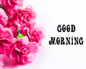 Beautiful Flower Good Morning Images pictures photo hd download