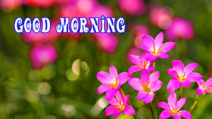 Beautiful Flower Good Morning Images pictures pics free download