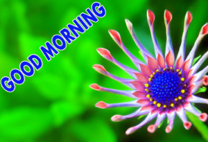 Good Morning Images pictures photo hd downlod