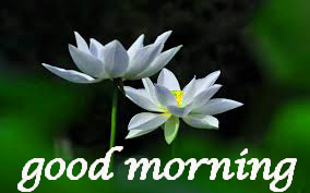 Good Morning Images pictures photo hd