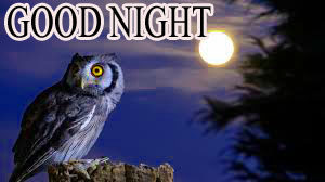 Lovely Good Night Images photo wllpaper download