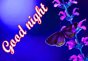 Good Night Images photo pictures photo download