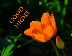 Good Night Images pictures pics free download