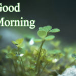 1133+ Latest good morning images HD Download