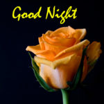 Beautiful Good Night Images Wallpaper In hd 821+ Good Night Photo