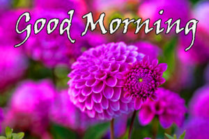 Flower Good Morning Images pictures photo download