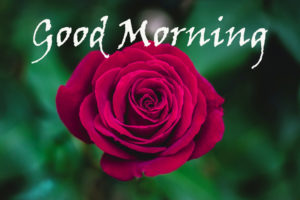 Flower Good Morning Images photo wallpaper download