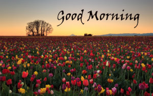 Flower Good Morning Images pics photo hd