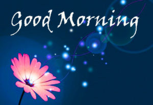 Flower Good Morning Images photo wallpaper free download