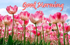 Flower Good Morning Images wallpaper pics free download
