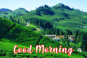 gd mrng images wallpaper photo free hd