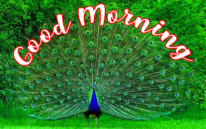 gd mrng images photo wallpaper free download
