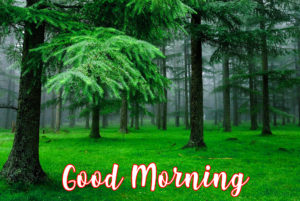 gd mrng images pics photo free hd download