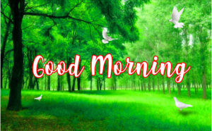 gd mrng images wallpaper photo download