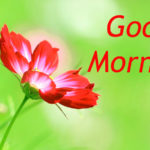 1236+ Good Morning Images New Wallpaper Pics Download HD