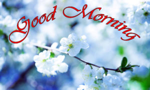 Good Morning Images pics photo download hd