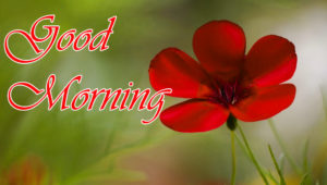 Good Morning Images photo wallpaper downloadGood Morning Images