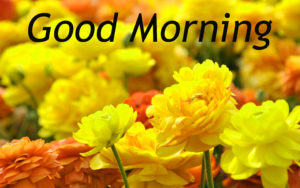 Good Morning Images pics photo download